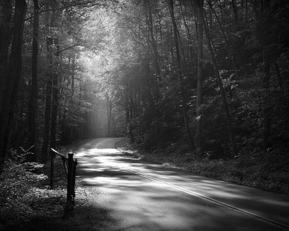 B3581D - Bell, Nicholas - Tremont Road, Smoky Mountains