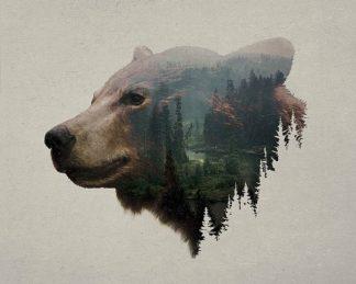 D1074D - Davies Babies - Pacific Northwest Black Bear