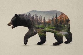 D1077D - Davies Babies - The North American Black Bear