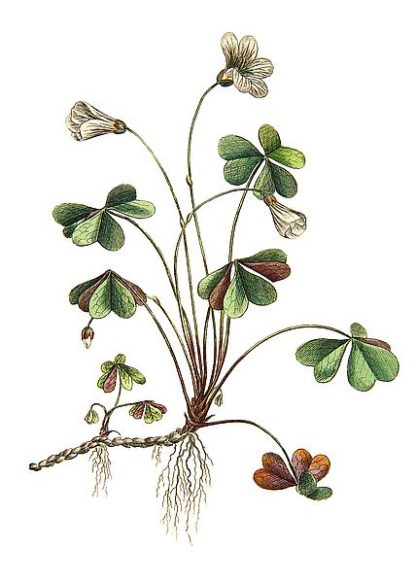 IN99046 - Incado - Botanica II