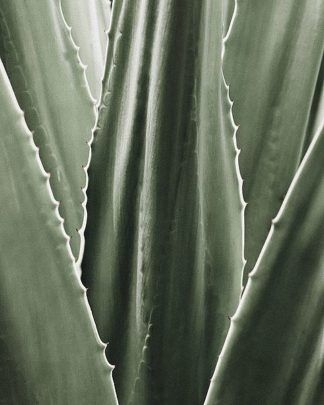IN99085 - Incado - Leaf I