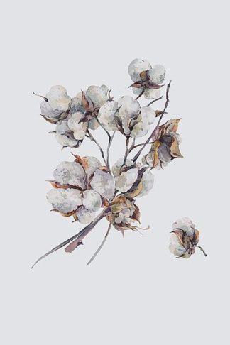 IN99099 - Incado - Cotton III