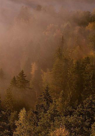 IN99166 - PhotoINC Studio - Autumn Forest