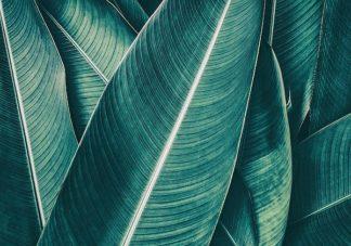 IN99181 - PhotoINC Studio - Banana