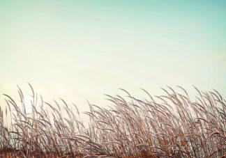 IN99202 - PhotoINC Studio - Retro Grass