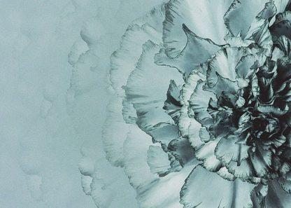 IN99223 - Incado - Close up Flower