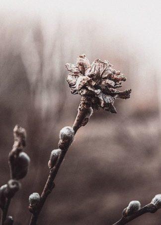 IN99224 - Incado - Spring
