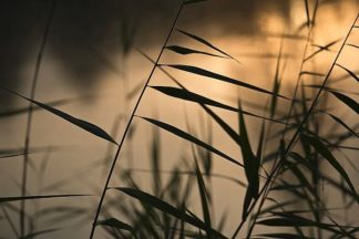 S1636D - Soloway, Eddie - Twilight Grasses
