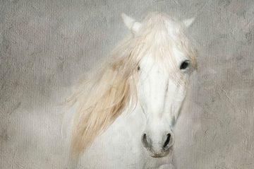 A468D - Asimow, Merrie - Stallion Face