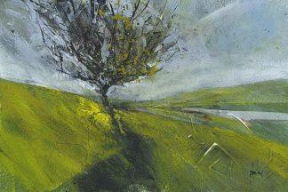 B3589D - Bailey, Paul - Cambrian Hawthorne