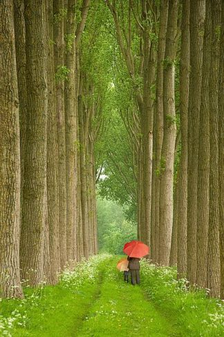 K2654D - Klug, Alan - Two Umbrellas, Belgium