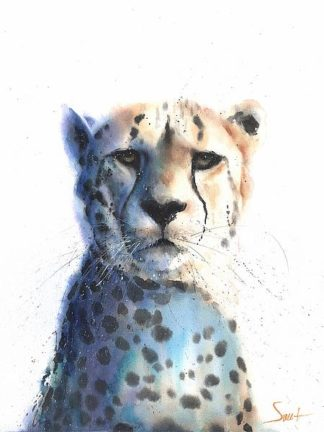 S1642D - Sweet, Eric - Cheetah