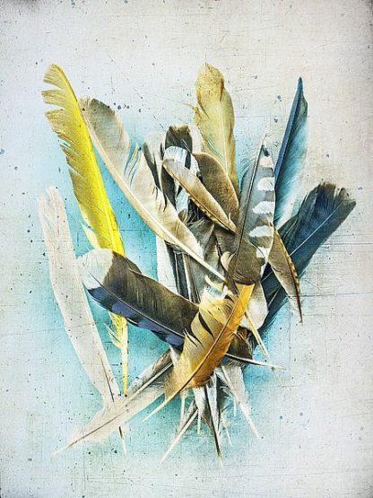 W932D - Wolfe, Kathy - Feather Study No. 1