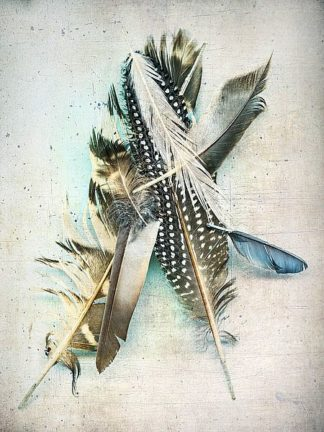 W936D - Wolfe, Kathy - Feather Study No. 5