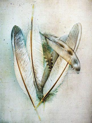W938D - Wolfe, Kathy - Hen Feathers