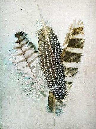W939D - Wolfe, Kathy - Owl - Guinea Feathers