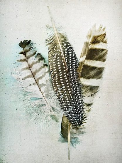 W939D - Wolfe, Kathy - Owl - Guinea Feathers