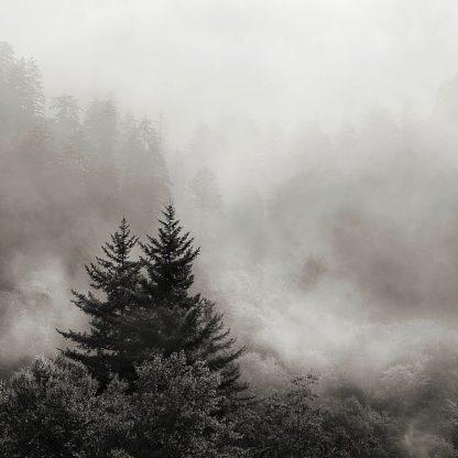 B3605D - Bell, Nicholas - Rising Mist, Smoky Mountains