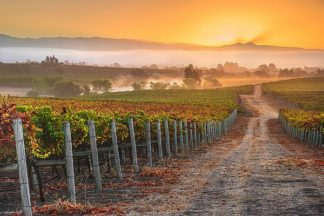 G985D - Gavrilis, John - Vineyard Sunrise