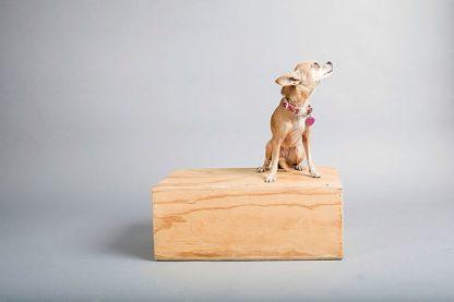 S1703D - Sabo, Susan - Small Dog, Big World