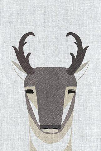 A523D - Annie Bailey Art - Pronghorn Antelope
