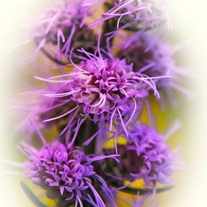 B3621D - Bell, Jan - Meadow Flowers