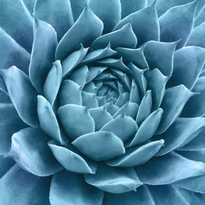 B3625D - Bell, Jan - Silvery Blue Agave