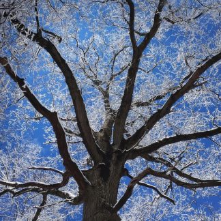 B3626D - Bell, Jan - Snow Covered Tree