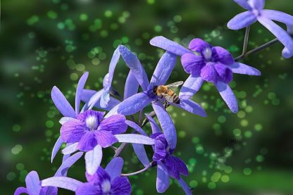 S1707D - Spears, Don - Bee and Purple Flowers