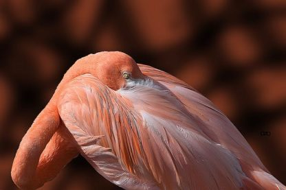 S1708D - Spears, Don - Flamingo