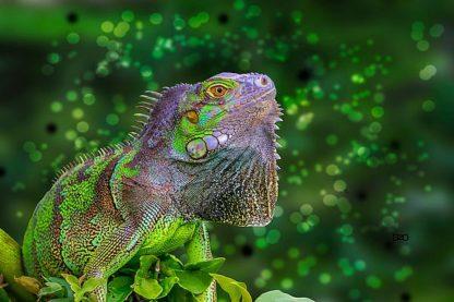 S1709D - Spears, Don - Green Iguana