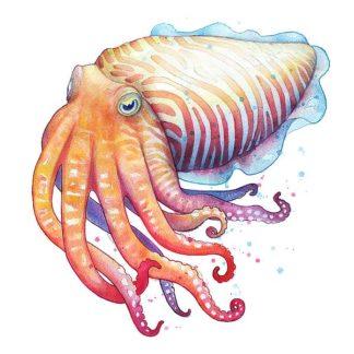 N377D - Nagel, Sam - Cuttlefish