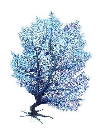 N379D - Nagel, Sam - Fan Coral - Blue