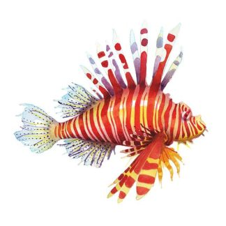N380D - Nagel, Sam - Firefish