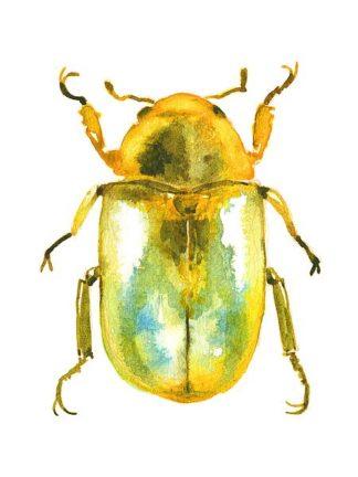 N381D - Nagel, Sam - Golden Beetle