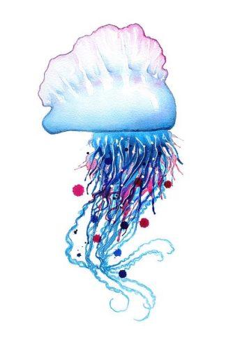 N384D - Nagel, Sam - Man o'War Jellyfish