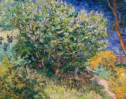 V701D - Van Gogh, Vincent - Lilac Bush
