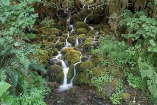 W986D - White, Lynda - Fern Waterfall