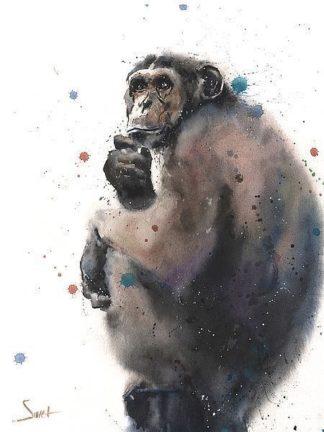 S1646D - Sweet, Eric - Chimpanzee