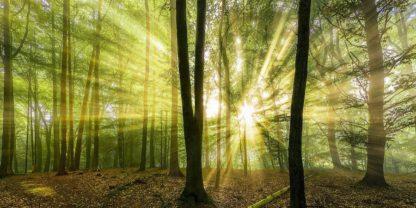 IG8532 - Fischer, Rolf - Nebelstimmung mit Sonne im Wald