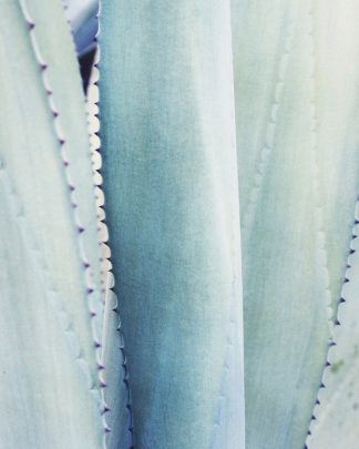 G2024D - Grainne, Lupen - Pale Blue Agave No. 3