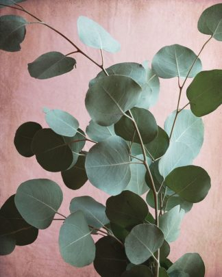 G2025D - Grainne, Lupen - Sage Eucalyptus No. 1