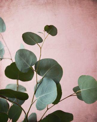 G2026D - Grainne, Lupen - Sage Eucalyptus No. 2