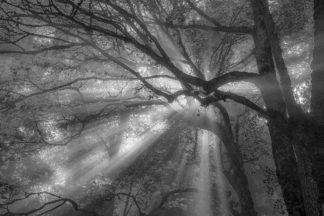 O328D - Oldford, Tim - Forest Fog