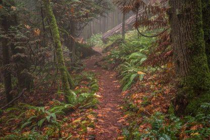 O332D - Oldford, Tim - Forest Stroll