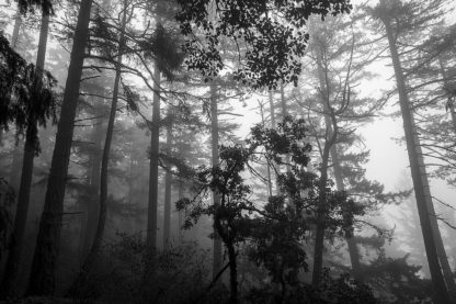 O333D - Oldford, Tim - Misty Forest
