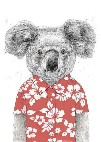 S1774D - Solti, Balazs - Summer Koala (Red)
