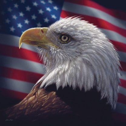 SBBC2001 - Bogle, Collin - American Bald Eagle