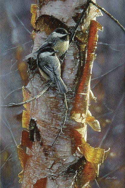 SBBC2042 - Bogle, Collin - Black-Capped Chickadees - Sunlit Birch