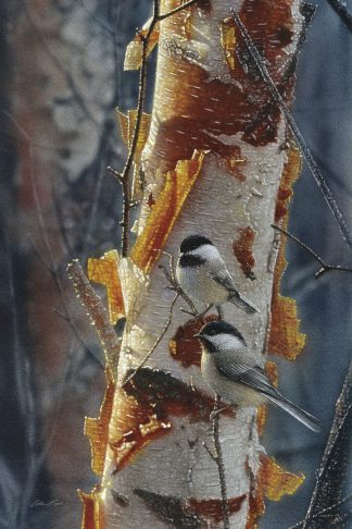 SBBC2043 - Bogle, Collin - Black-Capped Chickadees - Sunlit Birch II